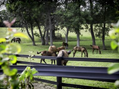 horse-2767071_960_720